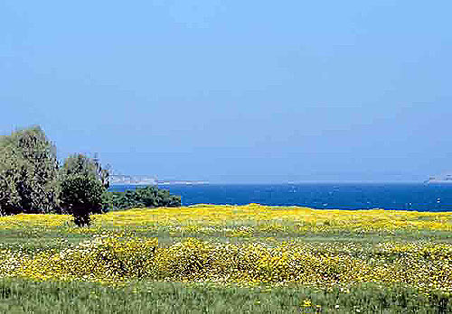 FIELD - A field with flowers in the spring in Mastichari