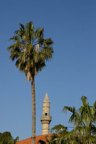 Palm tree - Palm tree and minaret. This shot was taken from the old city of Kws looking to a Mouslim Church. Kos , Dodekanisa , Greece by nikos douzinas